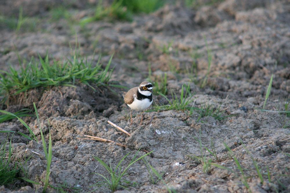 Foto zeigt einen kleinen Vogel | Stadt- und Landschaftsplanung